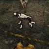 Редкая шестиногая собака в Примме
